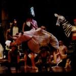 rhinos zebras frogs peng 150x150